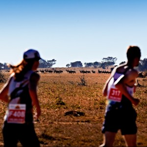 The Big Five Marathon + South Africa + Impossible Run + Yellow Valley + Animals  in Natural Habitat